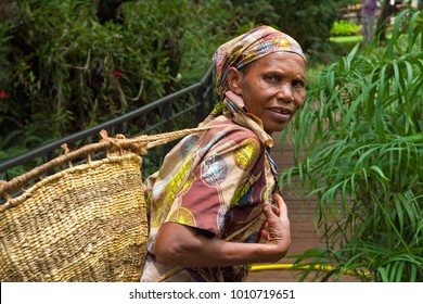 Arusha /Tanzania- March, 2016 : Tanzanian Woman works in coffee farm in Karatu north of Tanzania