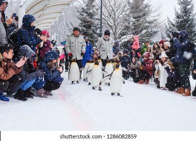 Asahikawa City,Hokkaido, Japan. Jan 8, 2019 :Penguin walking parade show on snow at Asahikawa Zoo in Hokkaido, Japan in winter.While snowing