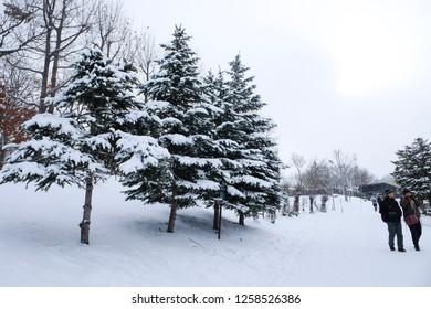 Asahikawa, Hokkaido/ Japan - December 8, 2018 : People walking in the snow at Asahikawa zoo in Hokkaido Japan with full of snow pine tree