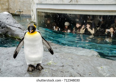 Asahikawa, Japan- 11 NOV 2015:  Visitors observing the penguins from a room with big window. Located in the very north of Japan, Asahiyama Zoo is home to 700 animals of 124 different species.