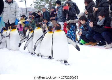 Asahikawa, Japan - January 3, 2017: Cute Penguin parade at Asahiyama zoo, Winter season. Most popular in Hokkaido, Sapporo. Many tourist in this place.