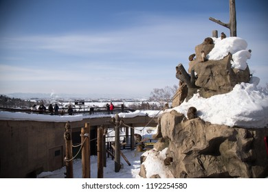 Asahiyama zoo, Asahikawa, Hokkaido, Japan - February 2018 : inside of Asahiyama zoo area in winter season with snow cover, the popular zoological garden in the world