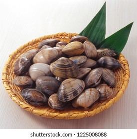 Asari clam, Manila clam, Japanese littleneck