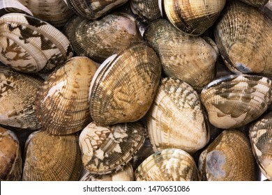 Asari (Venerupis philippinarum), a saltwater clam commonly used in miso soup, also know by the names,  Japanese littleneck clam, Manila clam, Japanese cockle, and Japanese carpet shell.