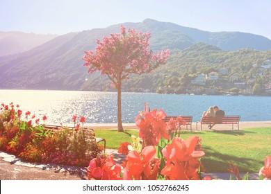 Ascona, Switzerland - August 23, 2016: Beautiful flowers at promenade of the expensive resort in Ascona on Lake Maggiore, Ticino canton, Switzerland. Sunlight toned