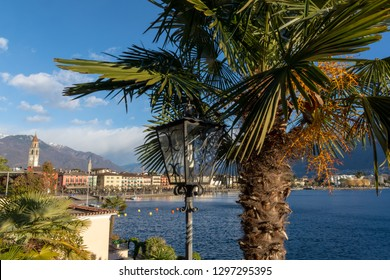 Ascona, Switzerland - January 2, 2019: Palm tree and the town of Ascona in the background.