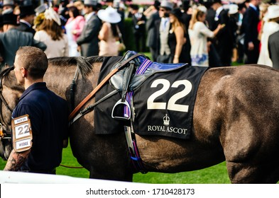 Ascot, England, The UK - June 16: General view of race horse on a ring during Royal Ascot 2015 at Ascot racecourse
