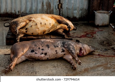 ASF. African swine fever. In the summer in the largest agricultural area of the south of Russia, quarantine was declared. The peasants were asked to destroy the pigs in their farms for two days.