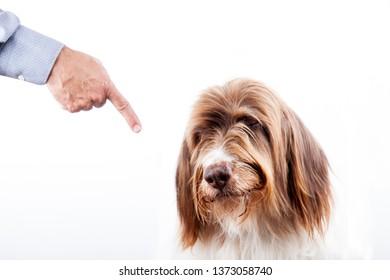 Ashamed dog. Education concept.