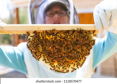 Ashburnham, MA/ United States May 23rd, 2018 A woman demonstrating keeping a recently installed Top Bar hive.