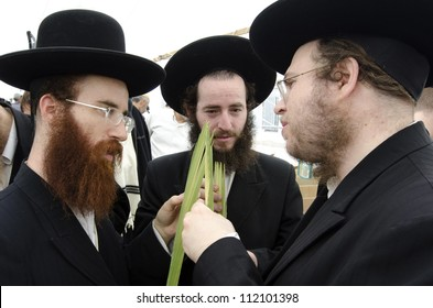 ASHDOD - OCTOBER 12 : Jewish ultra-orthodox  people inspect Lulav at a four species market for the Jewish holiday of Sukkot on October 12 2011 in Ashdod,Israel.