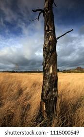 Ashdown Forest Landscape, Sussex, UK