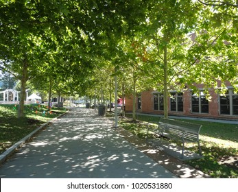 ASHEVILLE, NC / USA - SEPT 2015: A canopy of trees covers a sidewalk on the way to Pack Square Park in downtown Asheville, North Carolina