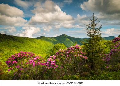 Asheville North Carolina Blue Ridge Parkway Spring Flowers Scenic Landscape with blooming rhododendron blossoms and fluffy clouds in the southern Appalachian Mountains