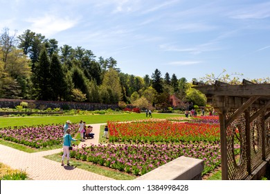 ASHEVILLE, NORTH CAROLINA, USA - APRIL 16, 2019  Throngs of visitors enjoy the spring tulips in the formal gardens of Biltmore Estate.