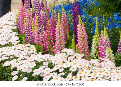Ashikaga flower park, Japanese botanical garden