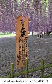 Ashikaga, Japan- May 05: incredible great wistaria board in Ashikaga flowers park
