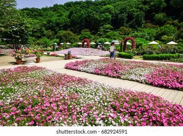 Ashikaga, Japan - May 20, 2017. People visit Ashikaga Flower Park at sunny day in Ashikaga, Japan. The park located in Ashikaga City, Tochigi Prefecture, Japan.