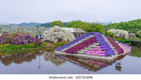 Ashikaga/Japan - May 5, 2016: Full blossom of wisteria or fuji flowers and multiple kind of flowers at Ashikaga park.