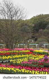 Ashikawa Japan - APR 2019: Landscape decoration in flower park during spring season on APRIL 12, 2019 at Ashikaga Flower Park, Tochigi, Japan