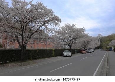 Ashikawa Japan - APR 2019: The street from JR station to Flower park on APRIL 12, 2019 at Ashikaga Flower Park, Tochigi, Japan