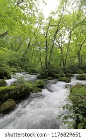 Ashura current of Oirase mountain stream in Aomori, Japan