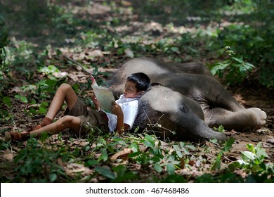 Asia boy sleeping in the forest with his baby elephant. The boy reading text book.