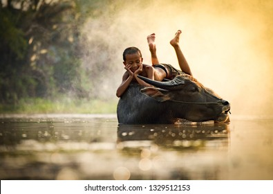 Asia child lying on buffalo / The boy happy and smile give love animal buffalo water on river with warm sunset tropical background in the countryside of living life kids farmer rural people