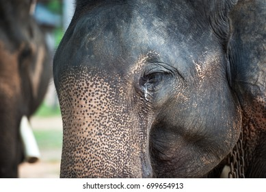 the necessity of the preservation of the asian elephant Mummy from 3,600 bc disproves 'natural preservation' theory,  note: to clarify something, eating fruit is not a necessity for a healthy life.