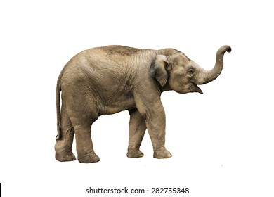 Elephant Images Stock Photos amp