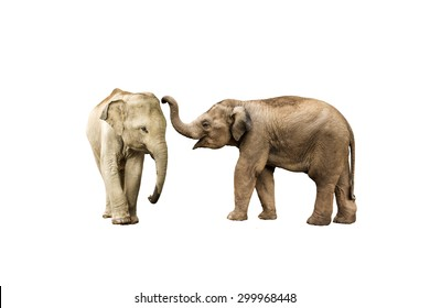 Asia elephant on isolated white background.