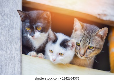 Asia kittens cute cat three white black and wrown tabby cat brethren on window looking outside