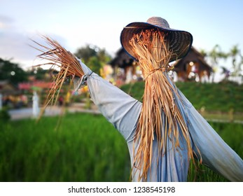 asia scarecrow in field
