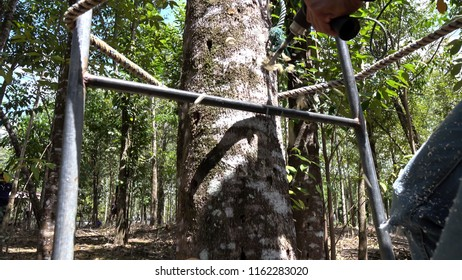 Asia worker drilling agar wood tree for making agar wood oil in oud production