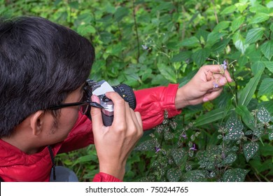 Asia young Scientists explore forests in Asia. hand holding camera. discovery concept, Wildlife conservationist, Wildlife Photographer holding pro digital mirorless camera with macro lens