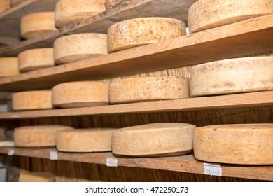 asiago cheese made from cows grazed on asiago Veneto Italian Alps