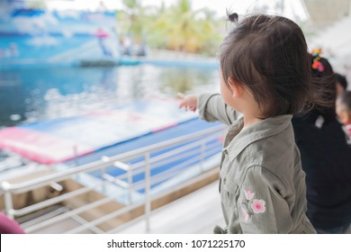 Asian baby girl enjoying to see dolphin show, family lifestyle concept.