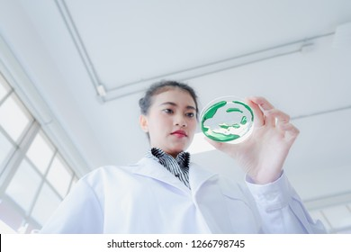 Asian beautiful scientist looking at detail in liquid experiment on petri dish in science laboratory. Portrait of health care and medical concept.