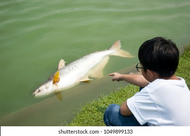 Asian boy found dead fish floating, very big but can not eat.  Abnormal death, chemical waste, industrial wastewater, water pollution. Danger for health.