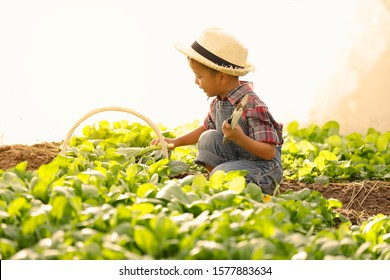 An Asian boy is picking vegetables from a plot in a organic house.