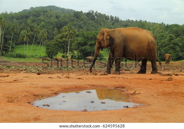 Asian brown elephant walking in a national park where there used to be trees