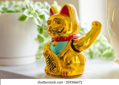 Asian cat waving its hand