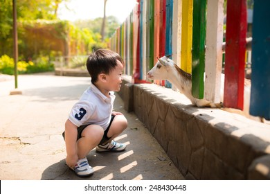 Asian child boy looking goat zoological garden in a sunny day.