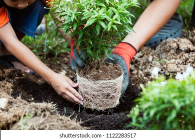 Asian child girl helping her father to plant the young tree in the garden as save world concept