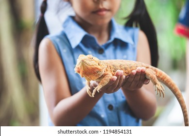 Asian child girl holding and playing with chameleon with curious and fun. She is not scared to hold it on hand.