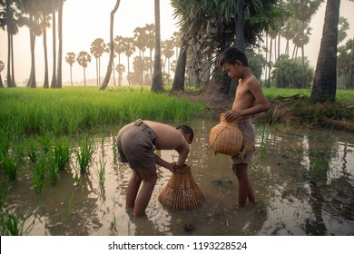 Asian children fisherman on the rice field or agricultural paddy field is holding the fish (fresh water fish). life concept.