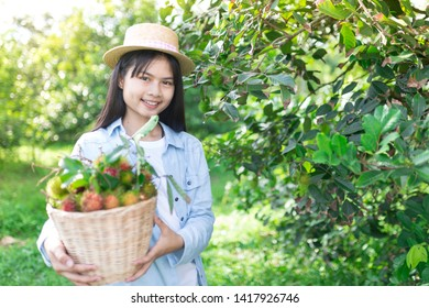 asian children gardener harvest organic rambutan fruit in organic farm, asian children holding fruit basket with her hand, thai fruit export