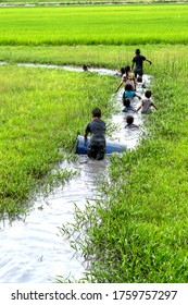 Asian children play in the muddy puddle at rice field