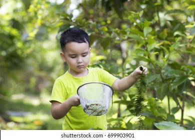 Asian Cute boy wear green T-shirt holds a fish scoop and one hand holds a Ceratophyllum demersum in the garden.