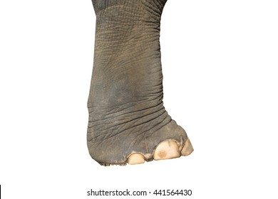 Elephant Foot Images Stock Photos Vectors Shutterstock Последние твиты от elephant yam (@suprnturl). https www shutterstock com image photo asian elephant feet on white background 441564430